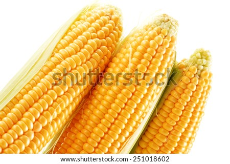 Ears of corn isolated on a white background  - stock photo