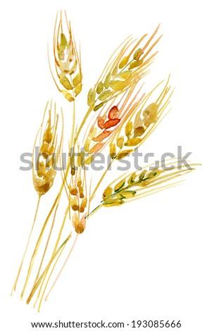 Ears of Rye - stock photo