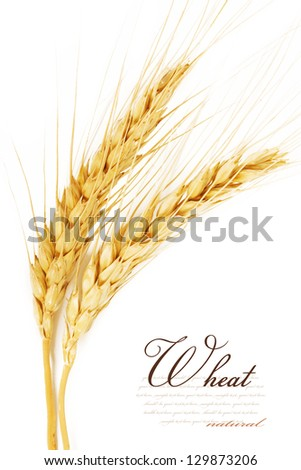 Ears of wheat. isolated on a white background - stock photo