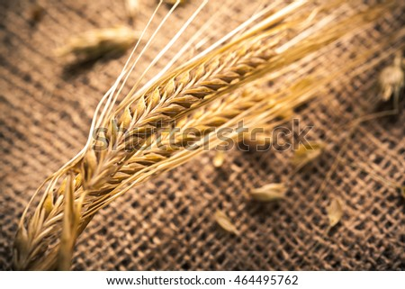 Ears of wheat on a sackcloth