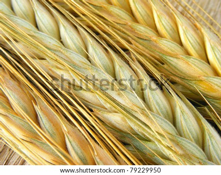 Ears of wheat on a wood background - stock photo