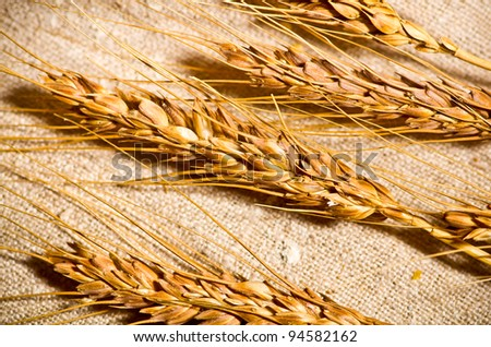 Ears of wheat on linen background