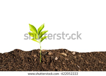 Earth day concept. Sided angle of new grown plant in the soil