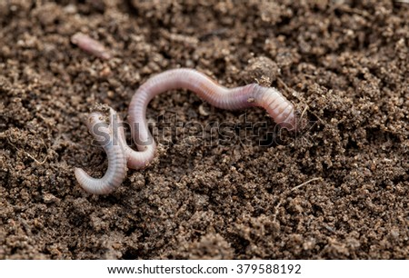 Earthworm in soil - closeup shot - stock photo
