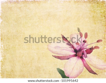 Earthy floral background image and useful design element - stock photo