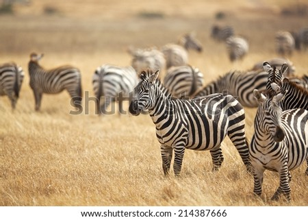East Africa Safari - stock photo