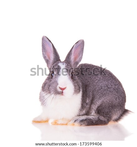 Easter baby rabbit isolated on white backgroun