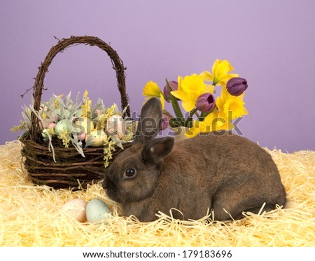 Easter basket and bunny - stock photo