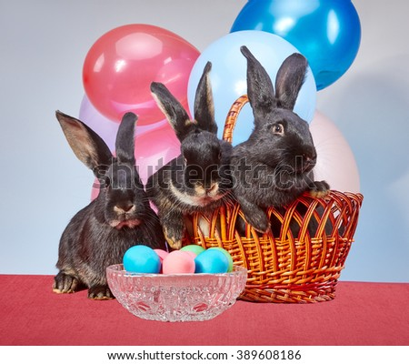 Easter bunnies. Easter eggs. Basket. Colored balls