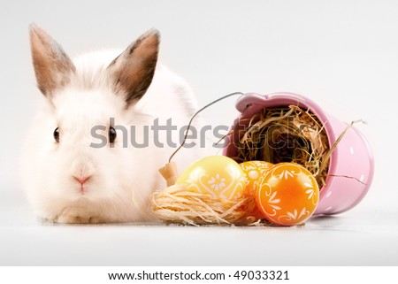 easter bunny and painted eggs - stock photo