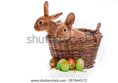 Easter Bunny.  Easter Bunny in the basket. - stock photo