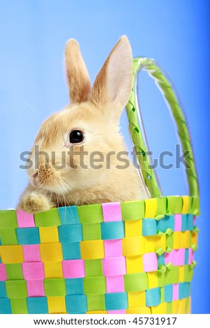 Easter bunny in a basket, on blue background