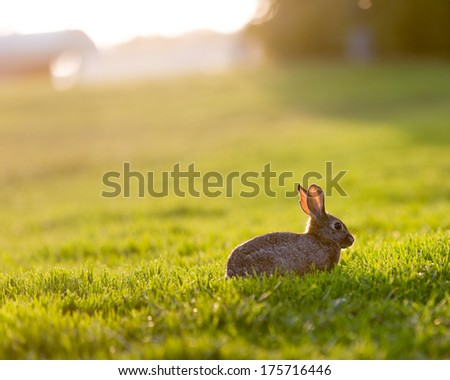 Easter Bunny in the meadow - stock photo