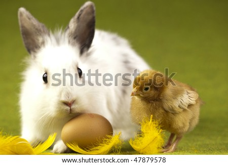 Easter bunny on chick green background