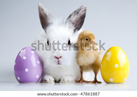 Easter bunny on chick white background - stock photo