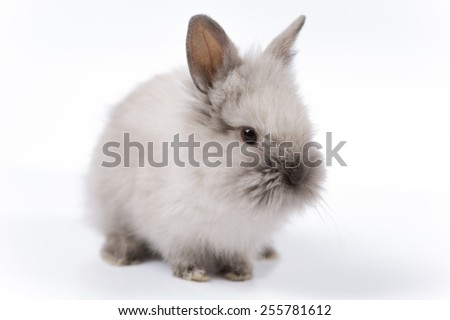 Easter bunny on white background isolated - stock photo