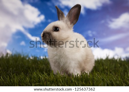 Easter, bunny white blue sky background - stock photo