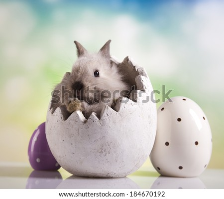 Easter bunny with eggs  - stock photo