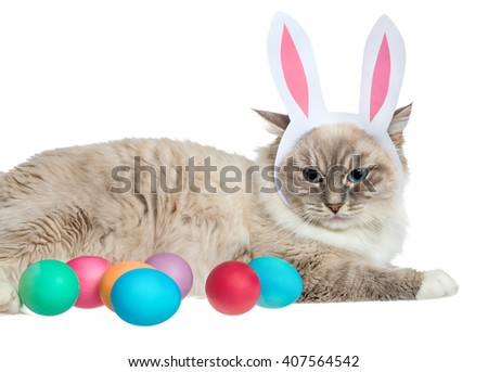 Easter cat and eggs