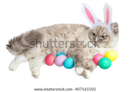 Easter cat with eggs