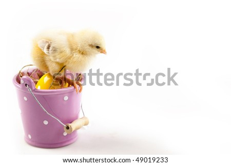 easter chick sitting on colored bucket - stock photo