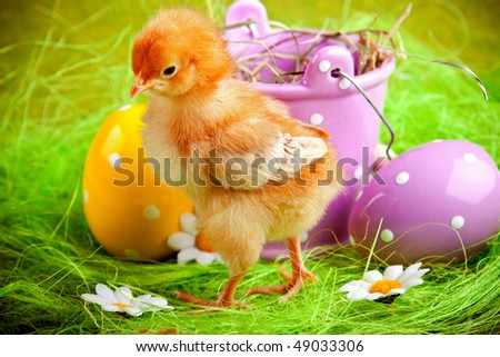 easter chick walking on green grass. eggs and bucket in background - stock photo