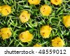 Easter Chicks On Green Grass. - stock photo