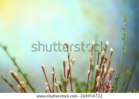 Easter colorful spring flowers on blurred background