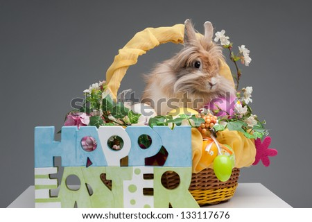 easter composition. happy easter sign and rabbit in easter basket isolated on gray background - stock photo