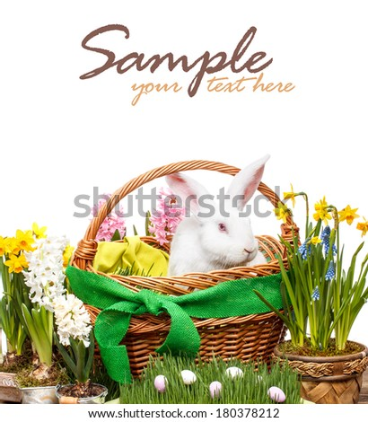 Easter concept with rabbit and spring flowers