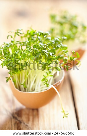 Easter decoration with cress salad in an eggshell - stock photo