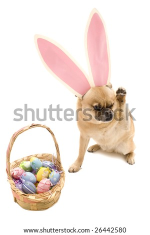 Easter Dog (so ashamed)