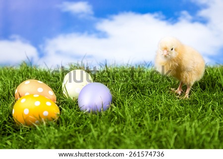 Easter, Easter Chicken, Easter Eggs, Easter card on green grass and sky clouds background - stock photo