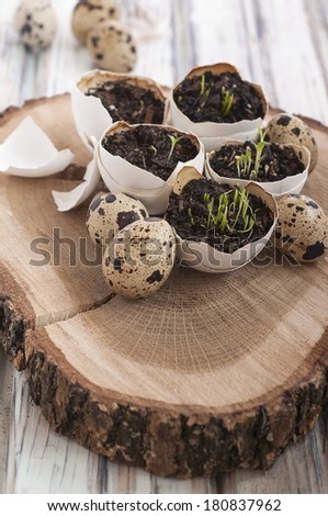 Easter egg shell decoration with plants - stock photo