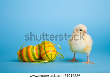 Easter eggs and chickens on blue background