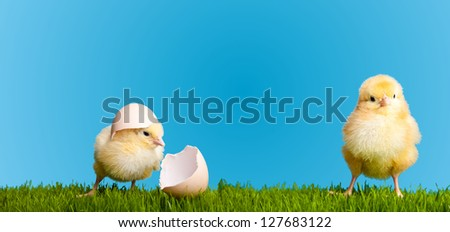 Easter eggs and chickens on green grass on blue background - stock photo