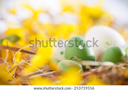 easter eggs between forsythia  - stock photo