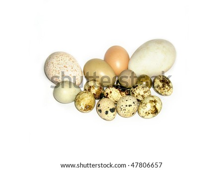 Easter eggs  collection isolated on white: pheasant, quail, duck,goose, penguin eggs - stock photo