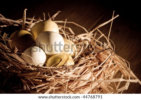 Easter eggs in birds straw nest lined with feathers with dramatic lighting - stock photo