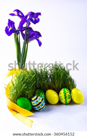 Easter eggs in fresh green grass with a yellow satin ribbon and purple iris flowers on white background. Easter background. Easter symbol. Easter hunt. Copy space - stock photo