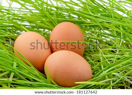 easter eggs in green grass. Close up