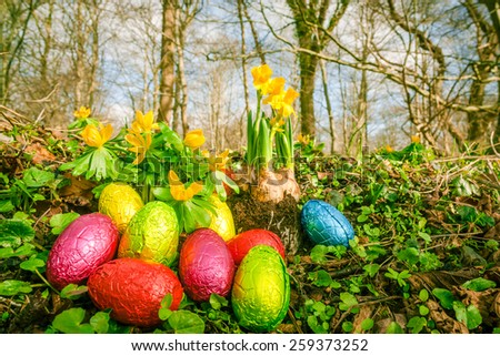 Easter eggs on the forest floor - stock photo
