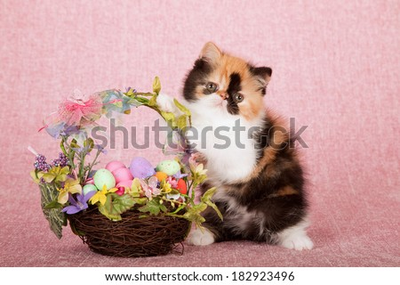 Easter Exotic kitten with floral Easter egg nest basket on pink background  - stock photo