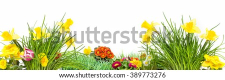 Easter, Flower Meadow, isolated, Banner