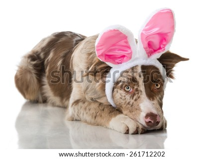 Easter puppy - stock photo
