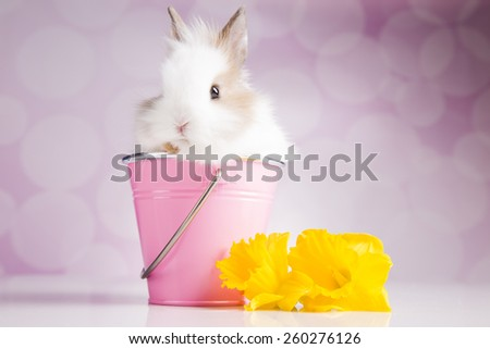 Easter rabbit. - stock photo