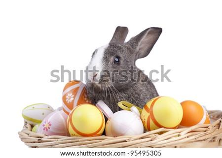 Easter rabbit inside a basket full of painted easter eggs  (isolated on white) - stock photo