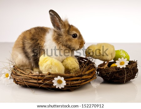 Easter, rabbits, chicken, eggs - stock photo
