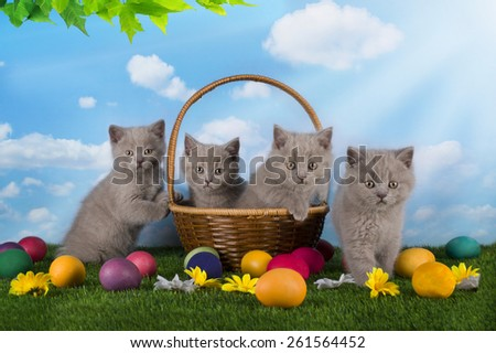 Easter small kittens playing in the grass with painted eggs - stock photo