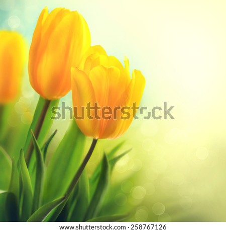 Easter Spring Flowers bunch. Beautiful yellow tulips bouquet. Elegant Mother's Day gift over nature green blurred background. Springtime. Growing tulips - stock photo